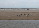 E9, North Sea Trail, Duin- en Polderpad, Hollands Kustpad LAW 5-3, Egmond - Groet
