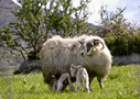 Allihies