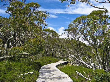 Hume & Hovell Walking Track: Kosciuszko National Park - by Jeff & Erin
